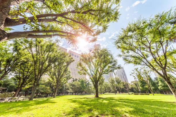 さわやかな朝の新宿中央公園 - 緑 ビル ストックフォトと画像