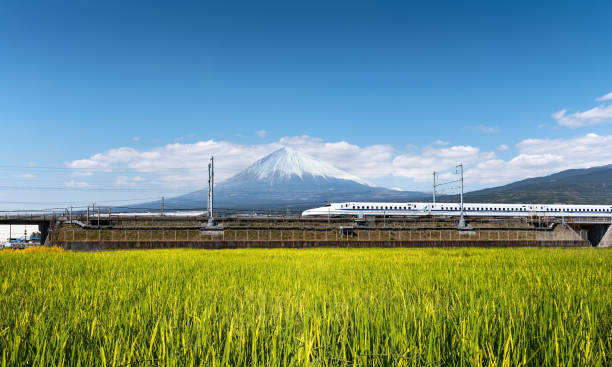 Shinkansen or Bullet train with rice field and Fuji mountain background stock photo