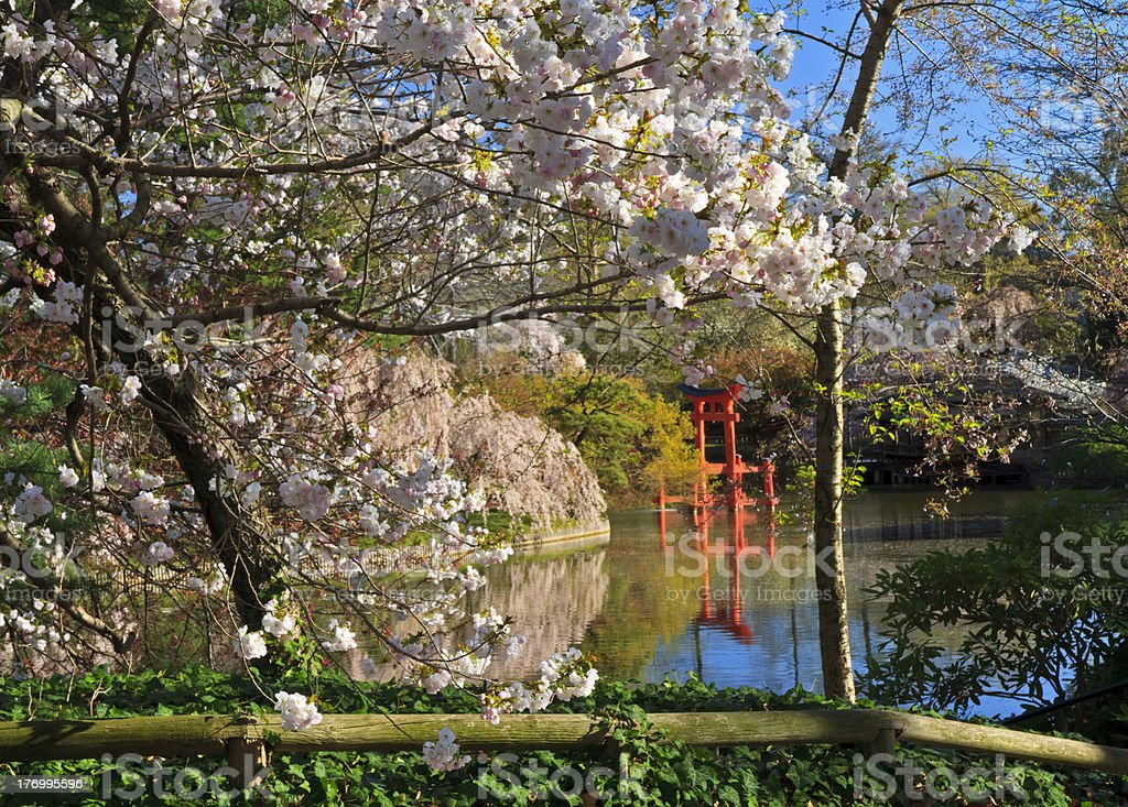 Shinto Shrine on Japanese Pond royalty-free stock photo