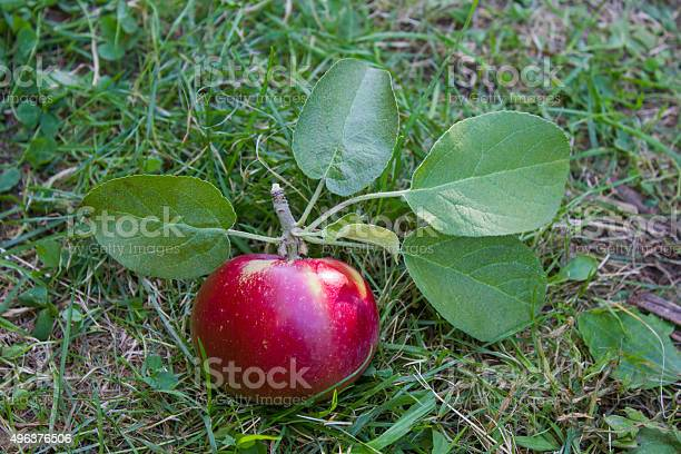 Shiny Red Apple On The Ground Stock Photo - Download Image Now