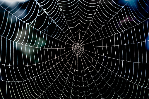 Shiny spider web with morning dew and dark background.