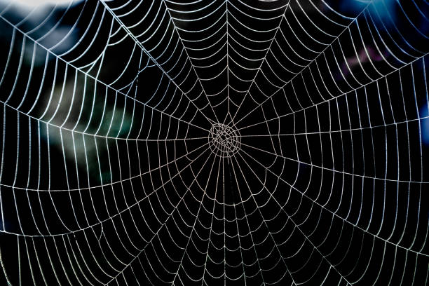 shiny spider web with morning dew and dark background. - spider web stock photos and pictures