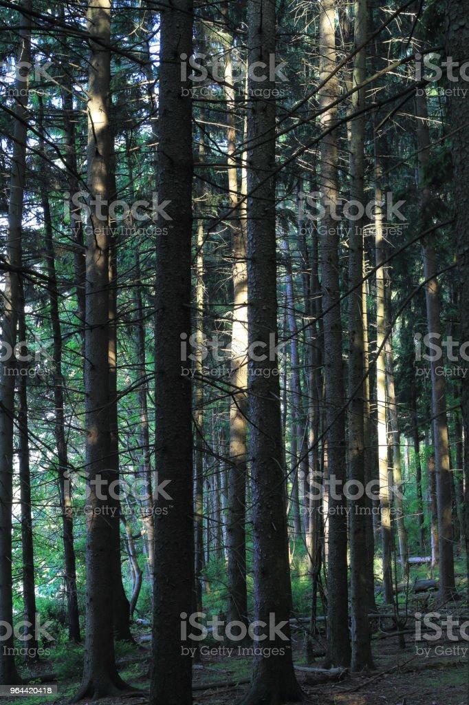 Shiny Tree in the Woods - Royalty-free Beauty Stock Photo