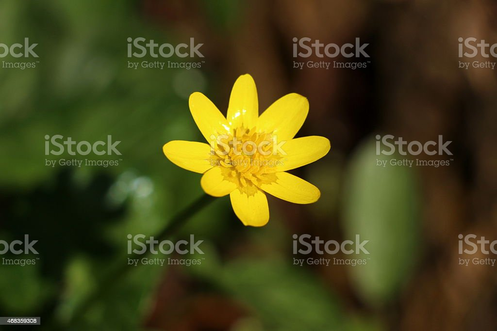 Shiny Yellow Flower royalty-free stock photo