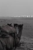 istock Ship of the desert to citylights. 1329711888