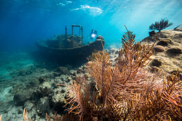 """ship wreck """"tugboat"""" in coral reef of caribbean sea around curacao - wreck diving stock pictures, royalty-free photos & images"""