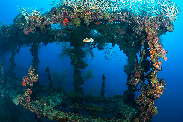 Shipwreck - Palau, Micronesia View of part of the shipwreck Teshio Maru, a Japanese Army Cargo Ship with 321 feet (98) on it's length, and was built in 1942-1944. The Teshio is one of the fishiest wrecks in Palau sunken stock pictures, royalty-free photos & images