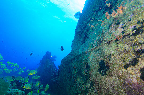shipwreck - artificial reef stock pictures, royalty-free photos & images