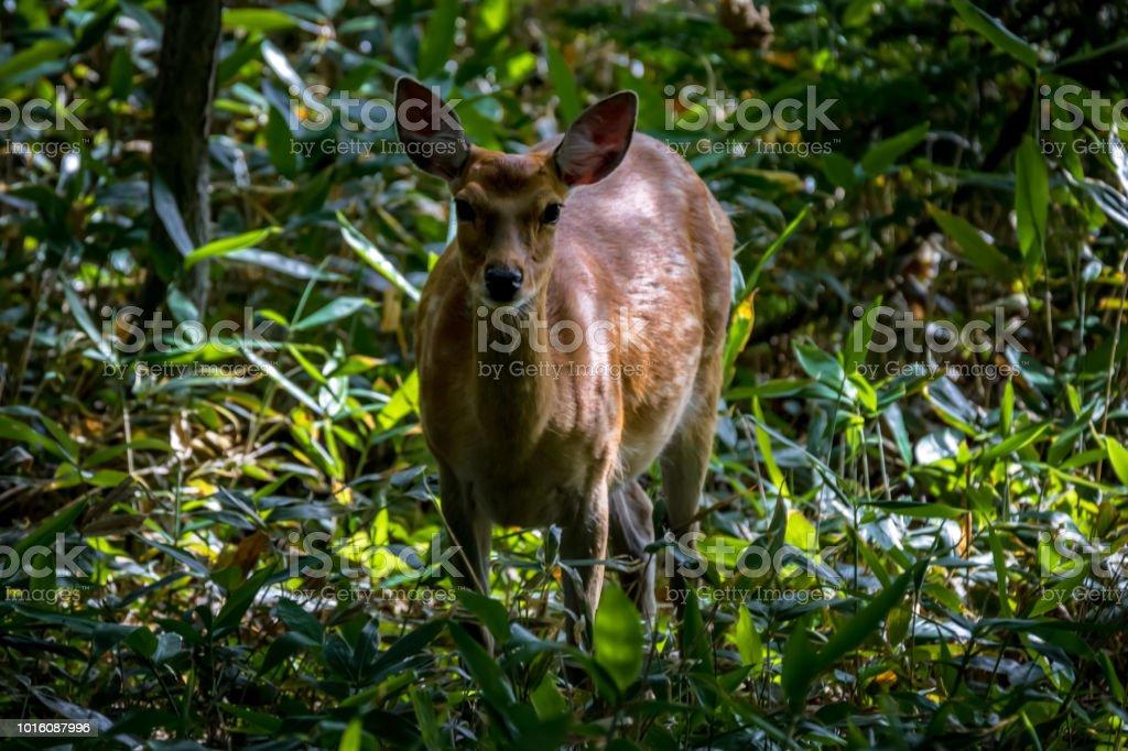 知床の野生動物の楽園であります。 ストックフォト