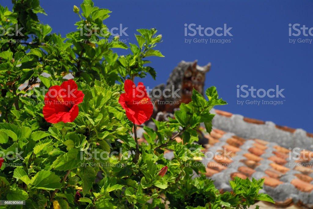 Shisa and hibiscus stock photo