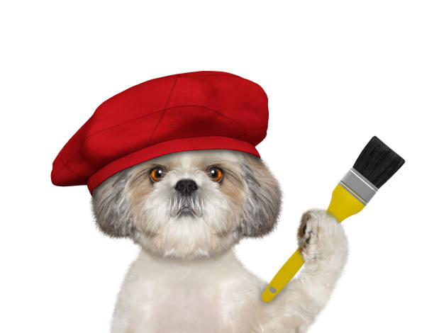 Shitzu dog as a painter with a brush. Isolated on white stock photo