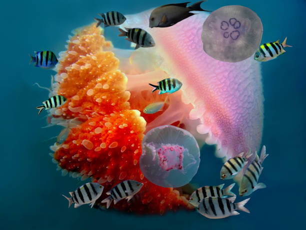 Shoal of fish and giant jellyfish stock photo