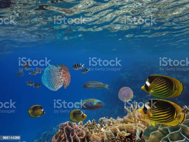 Shoal Of Fish And Giant Jellyfish — стоковые фотографии и другие картинки Бали