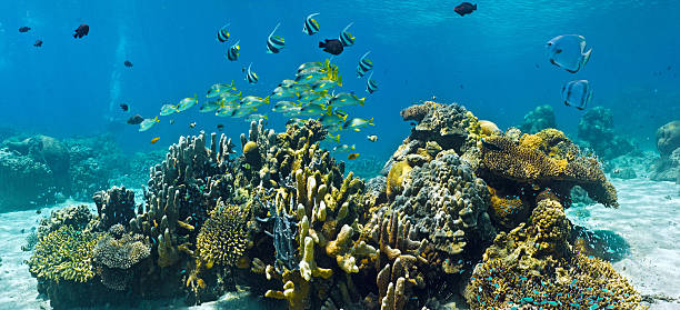 Shoal of fish on the coral reef - panorama stock photo