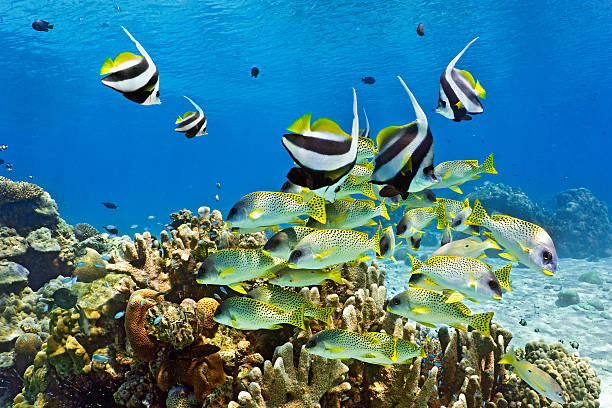 Shoal of fish on the coral reef stock photo