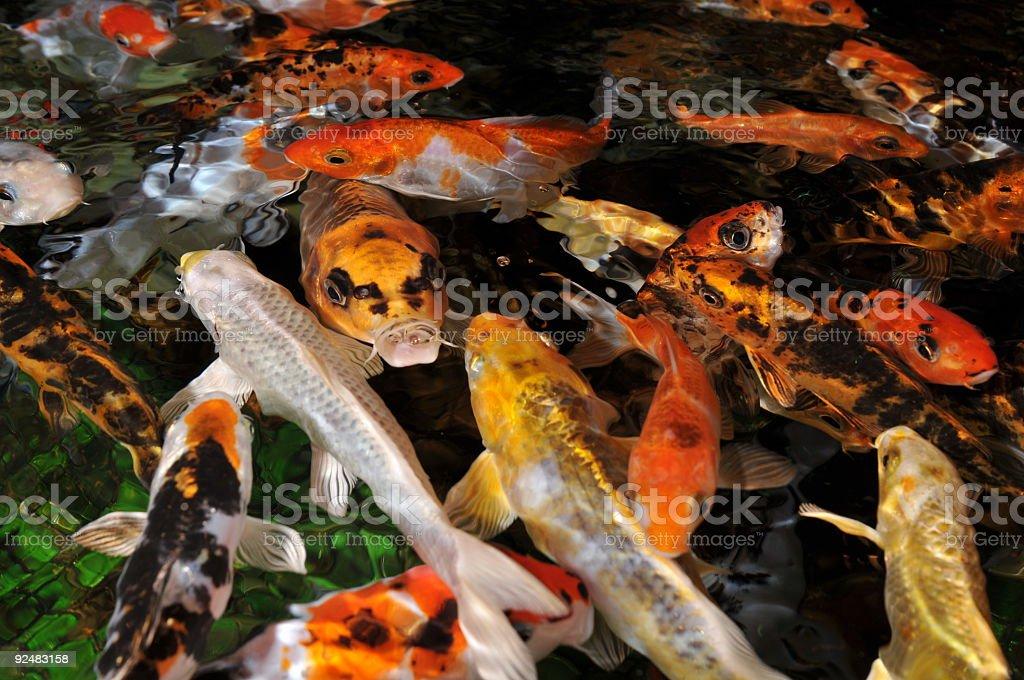 shoal of fish royalty-free stock photo
