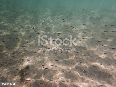 Shoal of small fish in a cenote in the Yucatan Peninsula of Mexico.