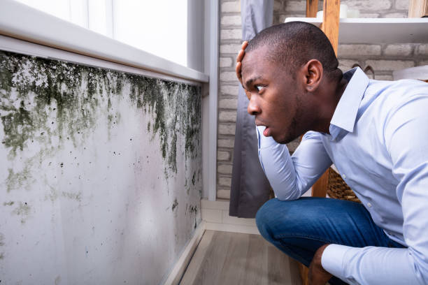 Shocked Man Looking At Mold On Wall Side View Of A Shocked Young African Man Looking At Mold On Wall fungal mold stock pictures, royalty-free photos & images