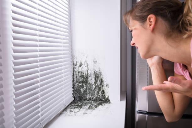 schockiert woman looking at schimmel an wand - backofenfenster reinigen stock-fotos und bilder