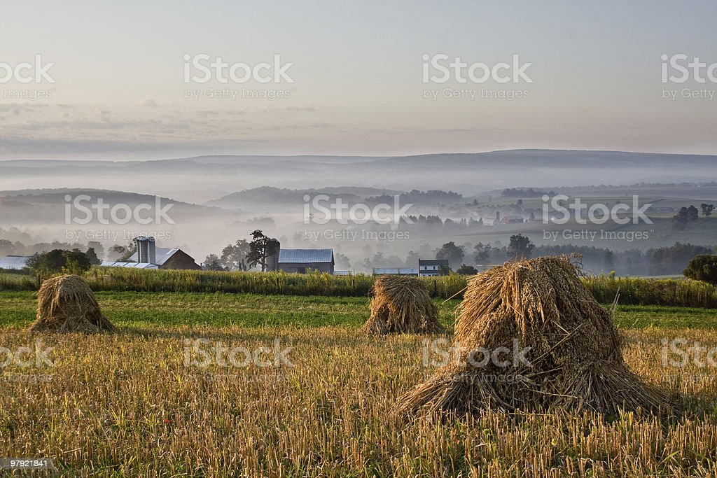 Shocks of wheat overlooking misty valley in early morning royalty-free stock photo