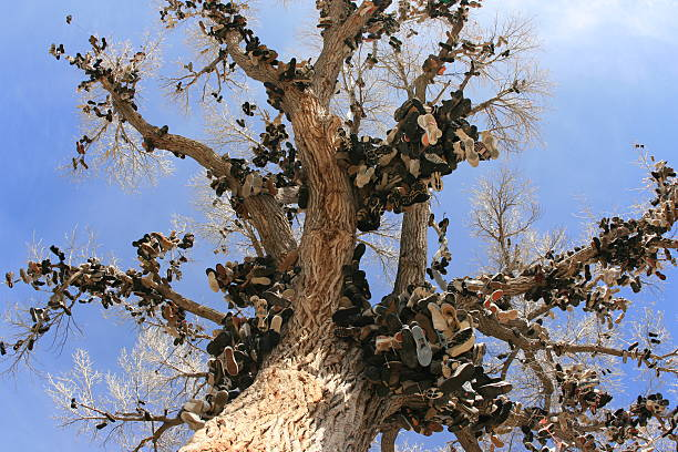Shoe Tree At Middlegate, Nevada stock photo