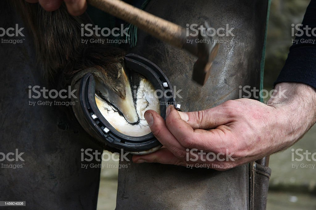 Shoeing the horse stock photo