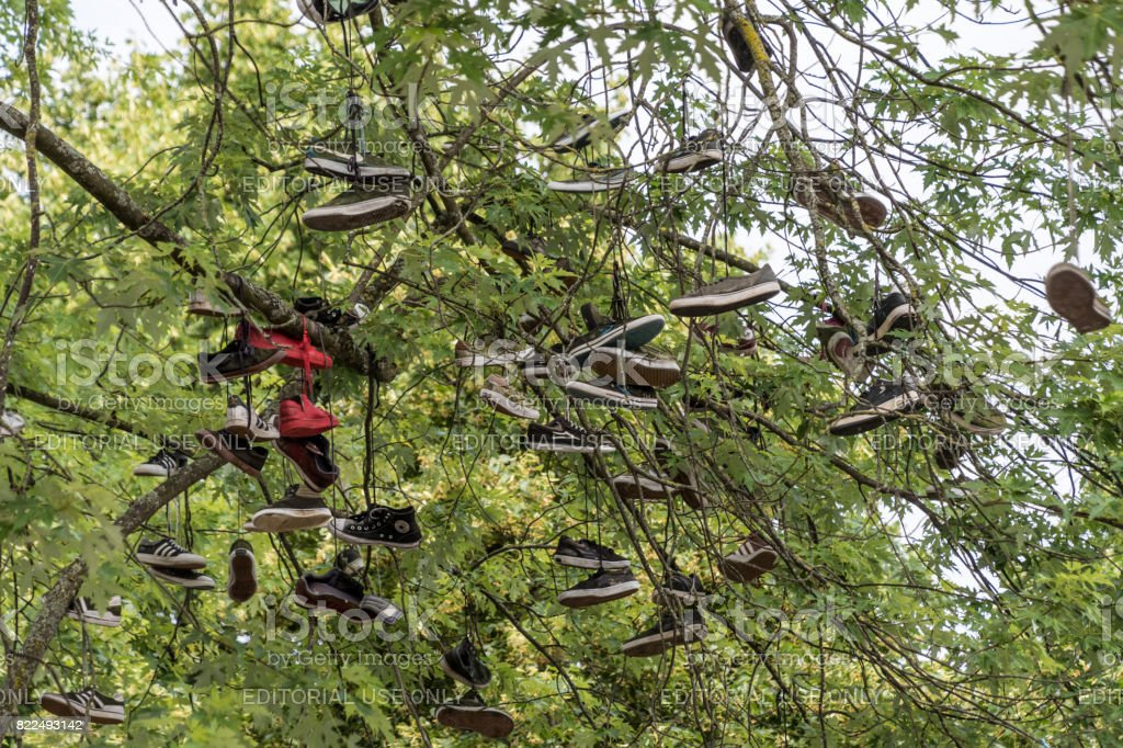 Shoes in a tree stock photo