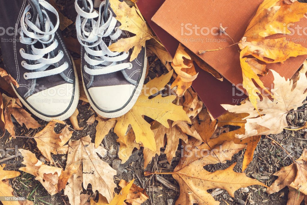 Shoes nature fashion and books