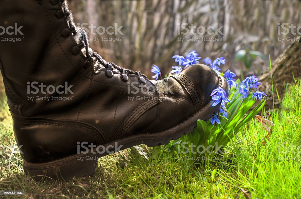 Shoes ruthlessly tramples the living flower stock photo