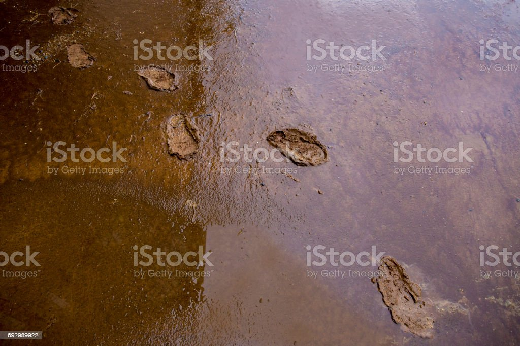 Shoes trace on the mud after raining. stock photo