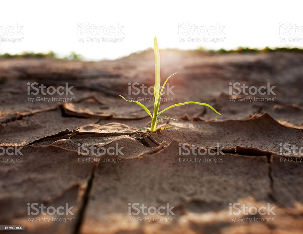 Shoot growing through parched earth. stock photo