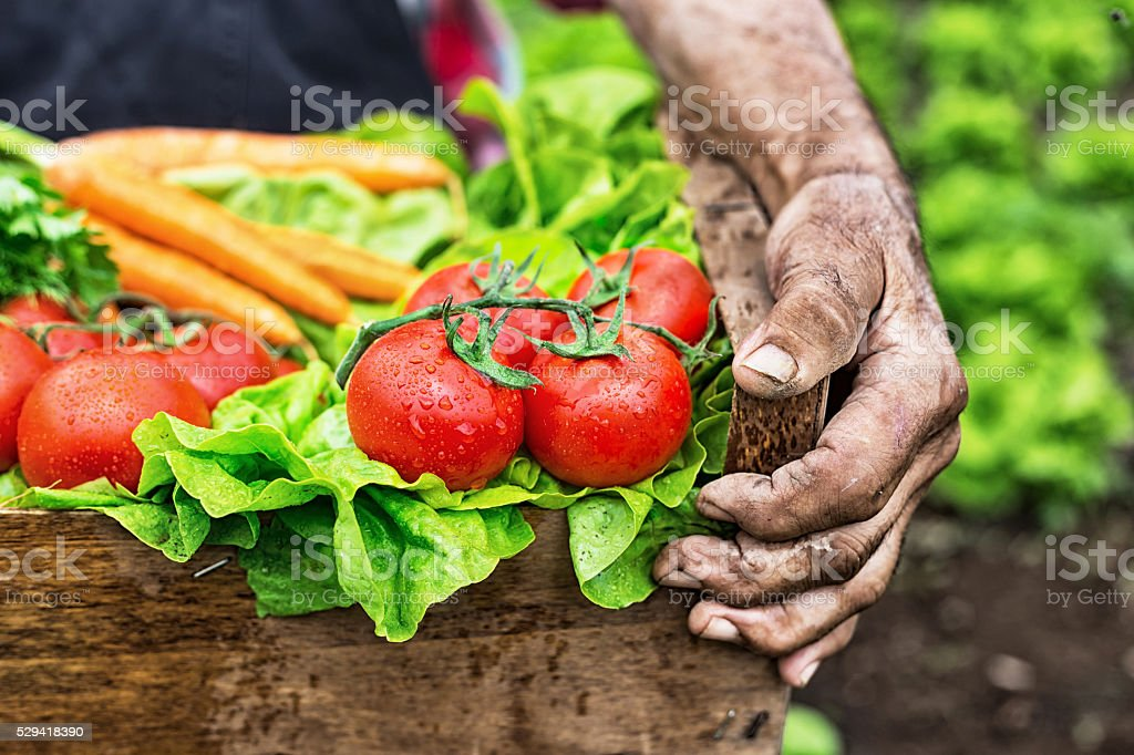 Shoot of hands holding a grate with raw vegetables stock photo