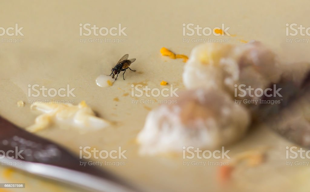 Shoot the flies on blurred and soft focus. stock photo