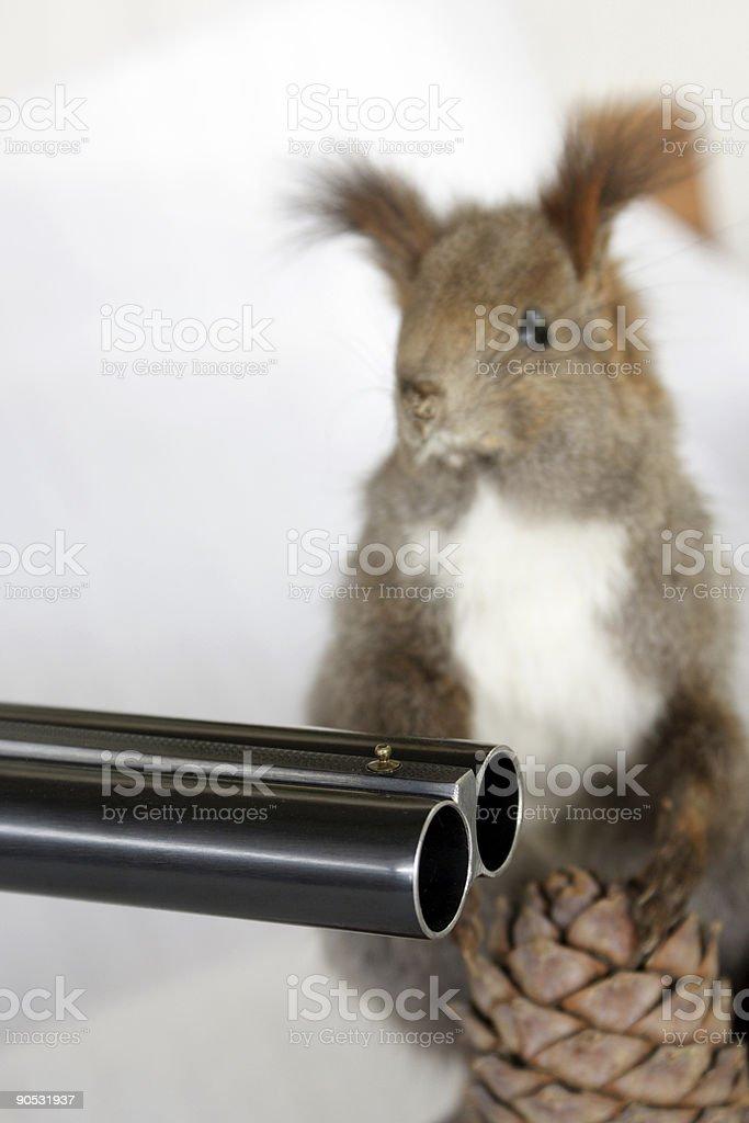 Schießen ein Squirell. Abstrakte Idee Töten Tiere – Foto
