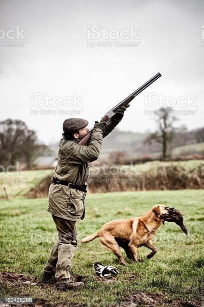 Photo of Shooting duck, gundog retrieves