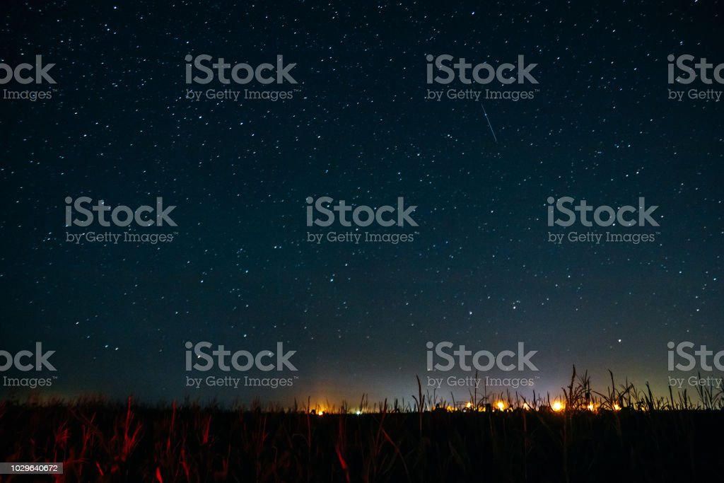 A field of corn and starry night sky with shooting star