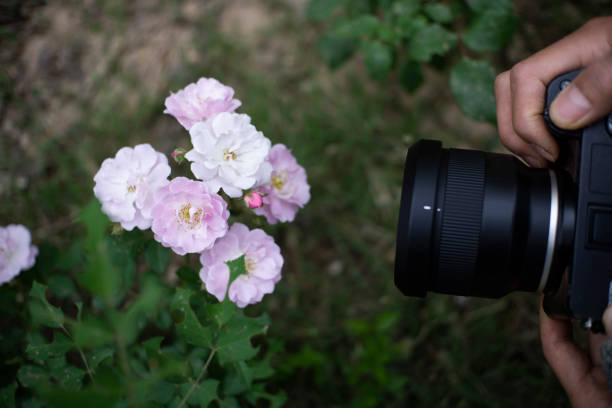 shooting wild flowers with camera