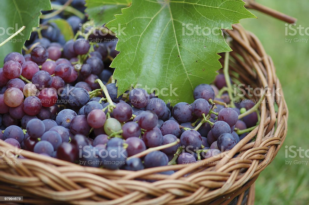 shopping Basket with grapes royalty-free stock photo