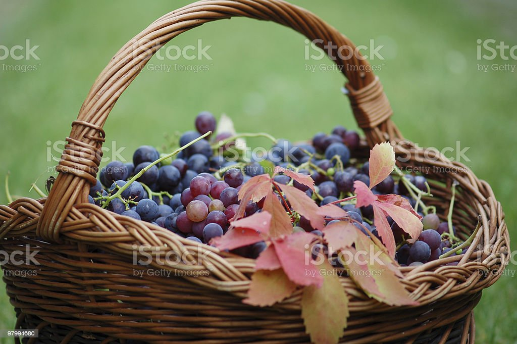shopping Basket with grapes royalty free stockfoto