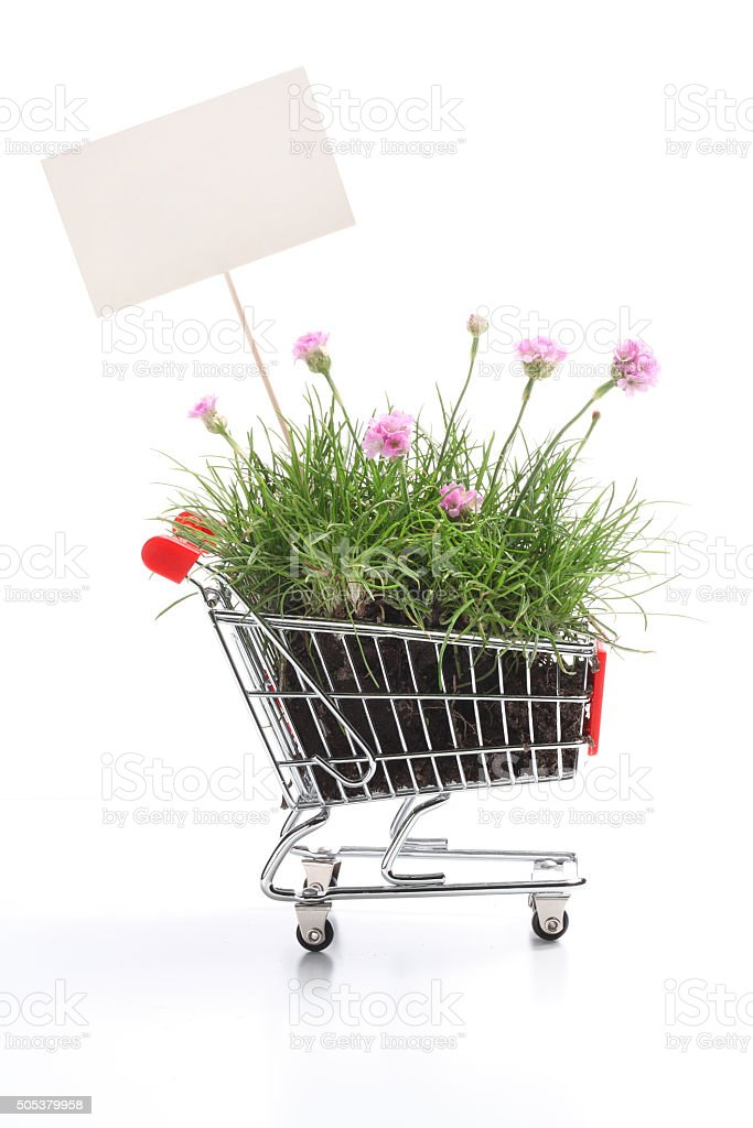 Shopping cart full of fresh herbs and flowers stock photo