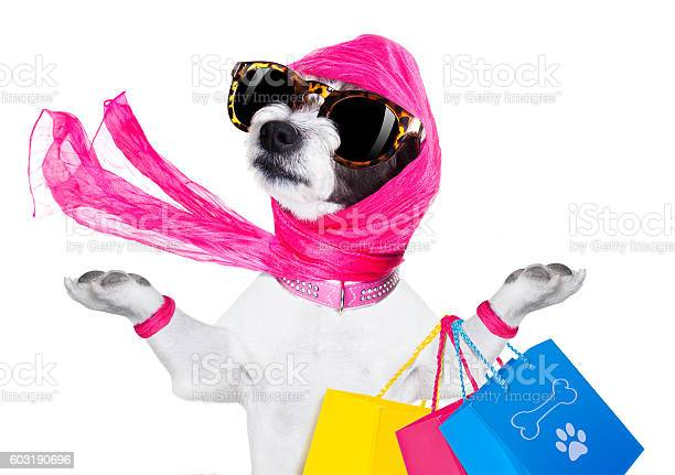 Shopping diva dog picture id603190696?b=1&k=6&m=603190696&s=612x612&h=bjx 5 okumfacwfd xb4rkl5quga9ohpf1imkuenmzm=