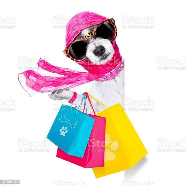 Shopping diva dog picture id626661020?b=1&k=6&m=626661020&s=612x612&h=llypaenpr9se6fatqcctdhhjzhdrb cqhz5fxkhots0=