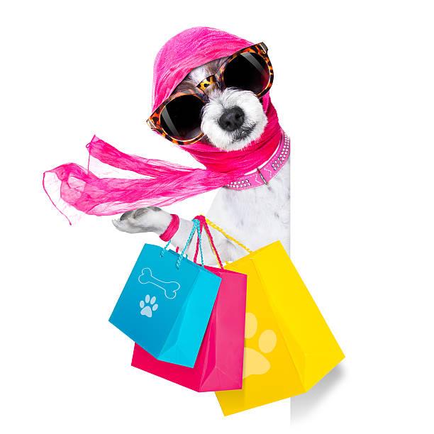 shopping diva dog stock photo