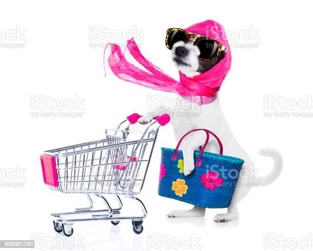 Shopping dog diva picture id958381290?b=1&k=6&m=958381290&s=612x612&h=3tpjxnrx amoc97agekc7lew442ot zadpiu05ra0io=
