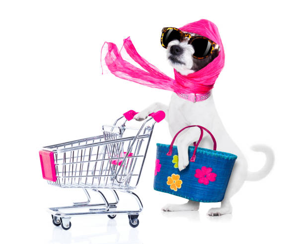 shopping dog diva crazy and silly  poodle dog diva lady with bag pushing  empty supermarket cart , isolated on white background diva human role stock pictures, royalty-free photos & images
