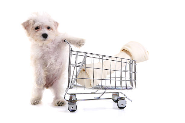 shopping dog - pet shop and dogs not cats stock pictures, royalty-free photos & images