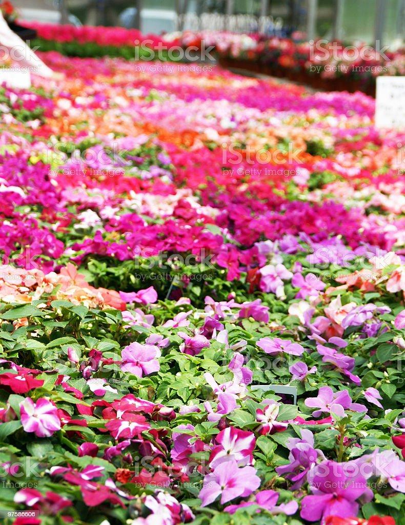 Shopping pour les fleurs photo libre de droits