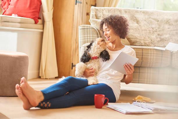 shopping für hündchen - sofa online kaufen stock-fotos und bilder