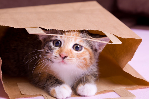 Shopping Kitten Stock Photo - Download Image Now