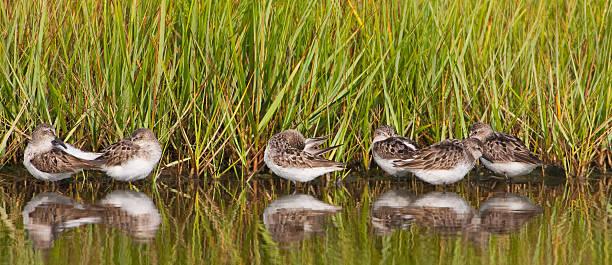 praia pássaros em wetland - com os pés na água - fotografias e filmes do acervo